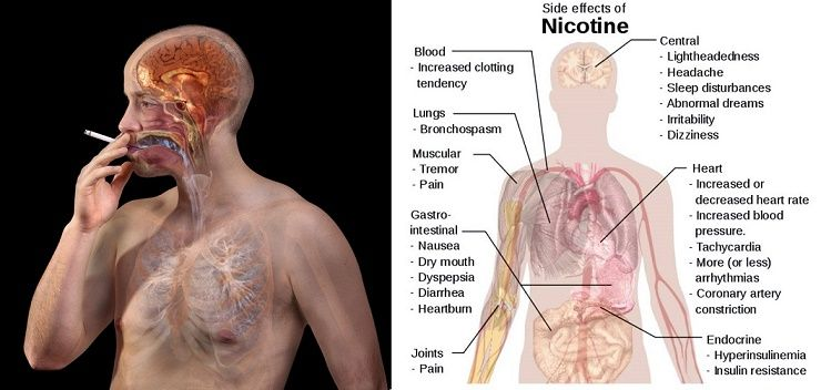 Attention Smokers These Foods Will Flush Out Nicotine From Your Body