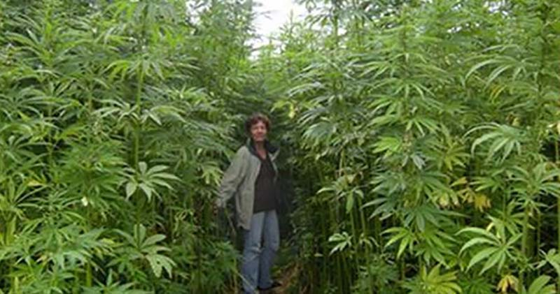 Move Over Cotton, Say Hello to Hemp — The 'Forbidden' Crop That is Taking the World by Storm