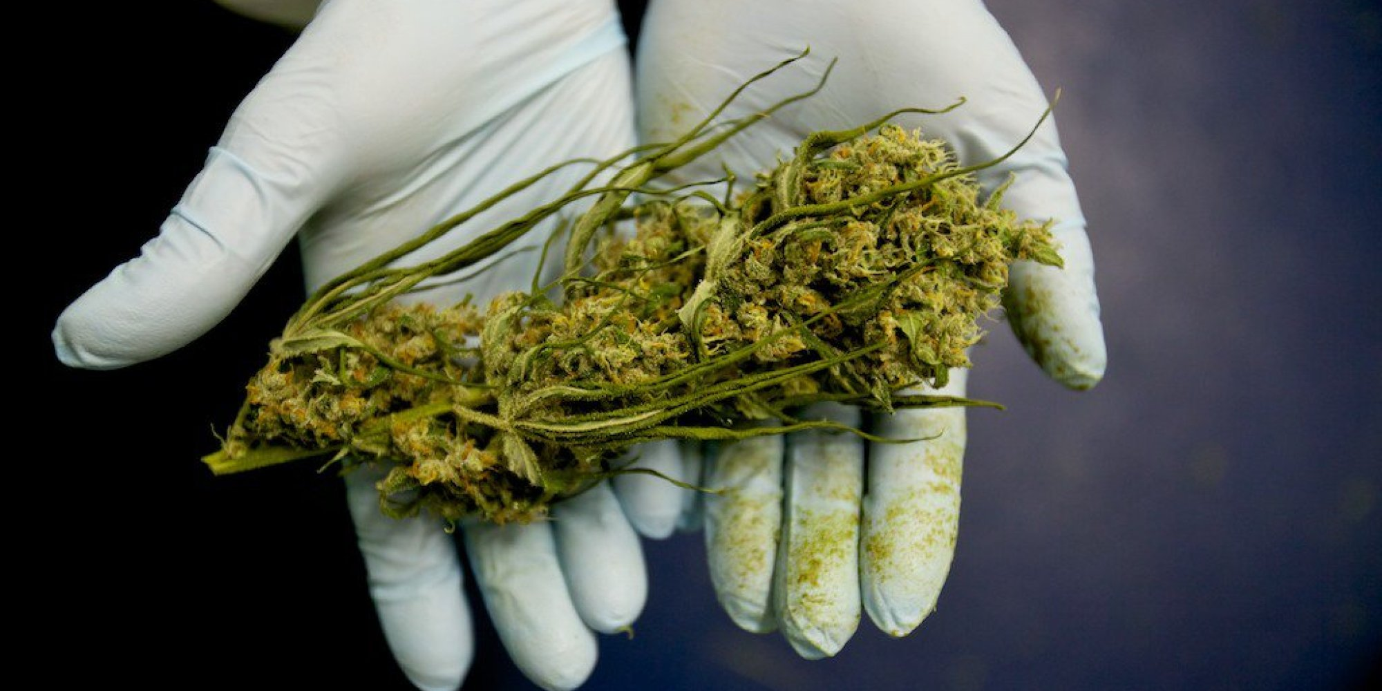 U.S. Government Finally Admits Marijuana Really Does Kill Cancer Cells